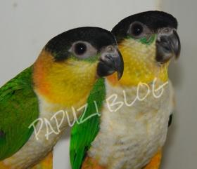 Odchody ptaków nazwa