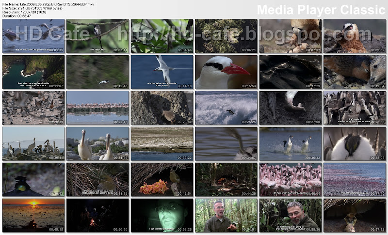 Life 2009 Episode 05 - Birds video thumbnails