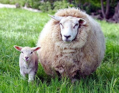 Liệu có thể xóa mờ tàn nhang nhờ tác dụng của nhau thai cừu?