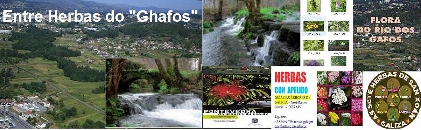 """Entre as Herbas do """"Ghafos"""""""