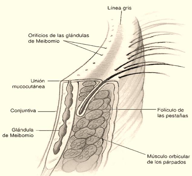 MEDICINA GENERAL - DR. DANIEL MENDOZA : ENFERMEDADES OFTÁLMICAS ...