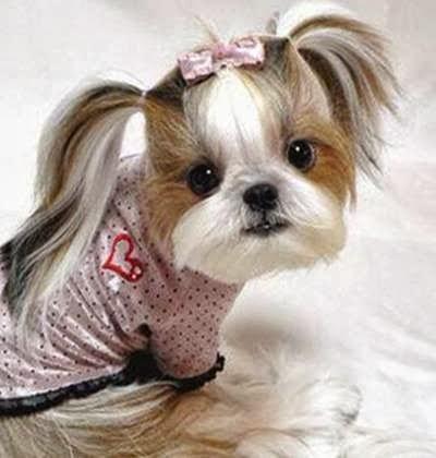 Gunggung Aneka Jenis Gambar Anjing