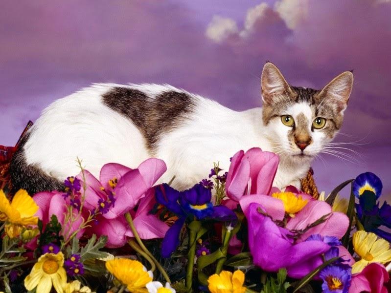 hình nền mèo con đáng yêu