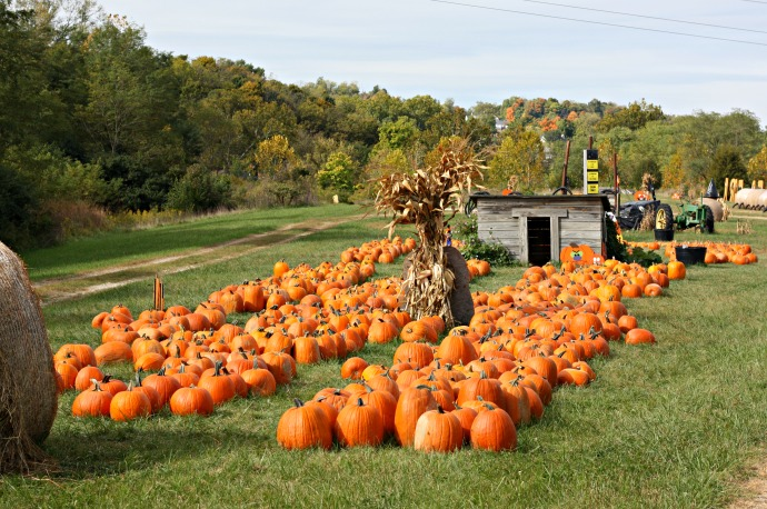 ohio-pumpkin-patch