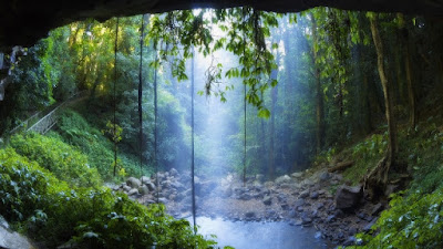 Materi IPA Konservasi Hutan Dan Udara