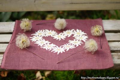 edelweiss, эдельвейсы, белый эдельвейс