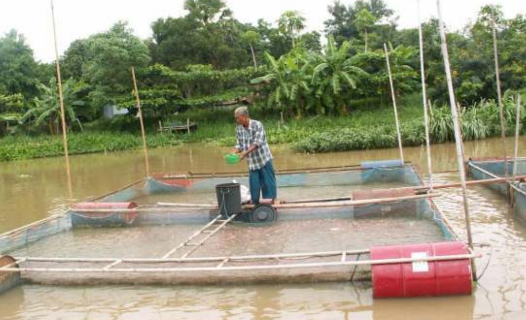 Ikhthys piscicultura ecol gica cultivo de tilapia ait for Densidad de siembra de tilapia