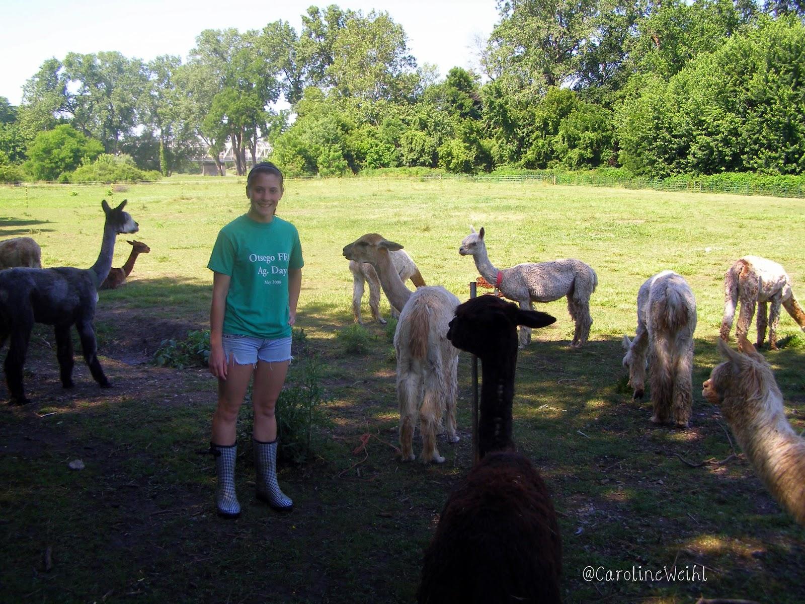 Caroline Weihl alpacas