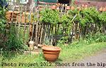 Projekt 2012
