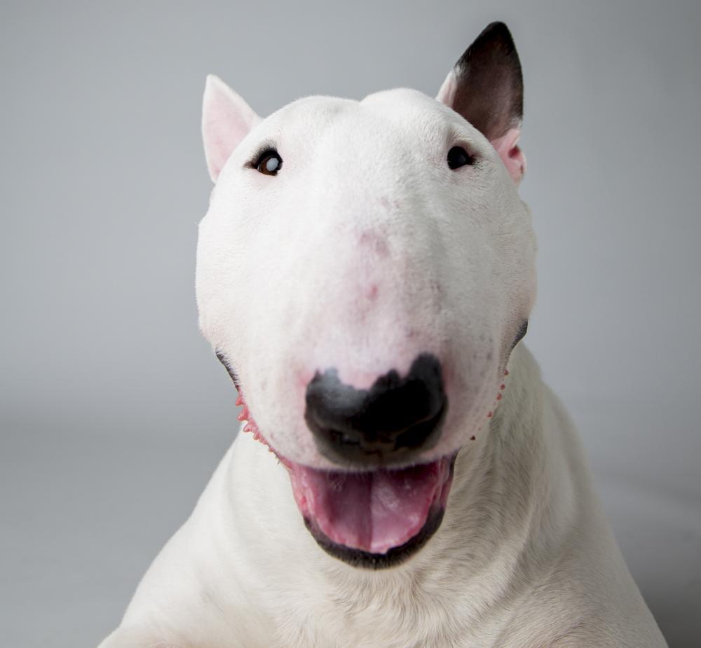 Фото 3 - прикольные собаки