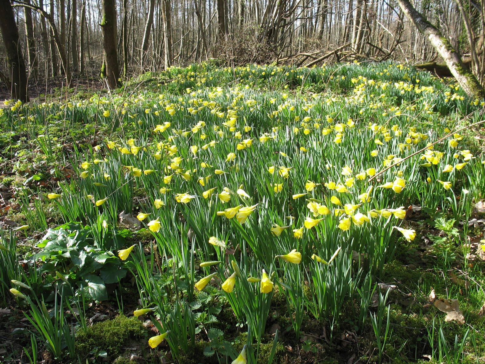 Blashford Lakes Wildlife Reserve Spring Clean And Flowers
