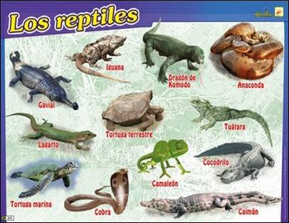 Todos los animales anfibios Mascotas facilisimo com