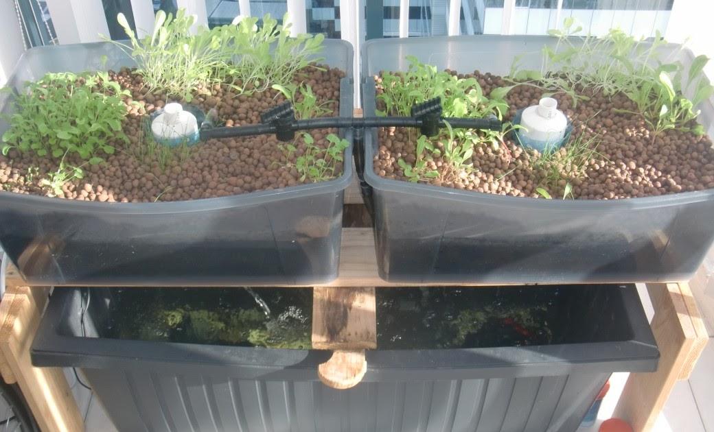 Urban green survival aquaponics for Balcony aquaponics