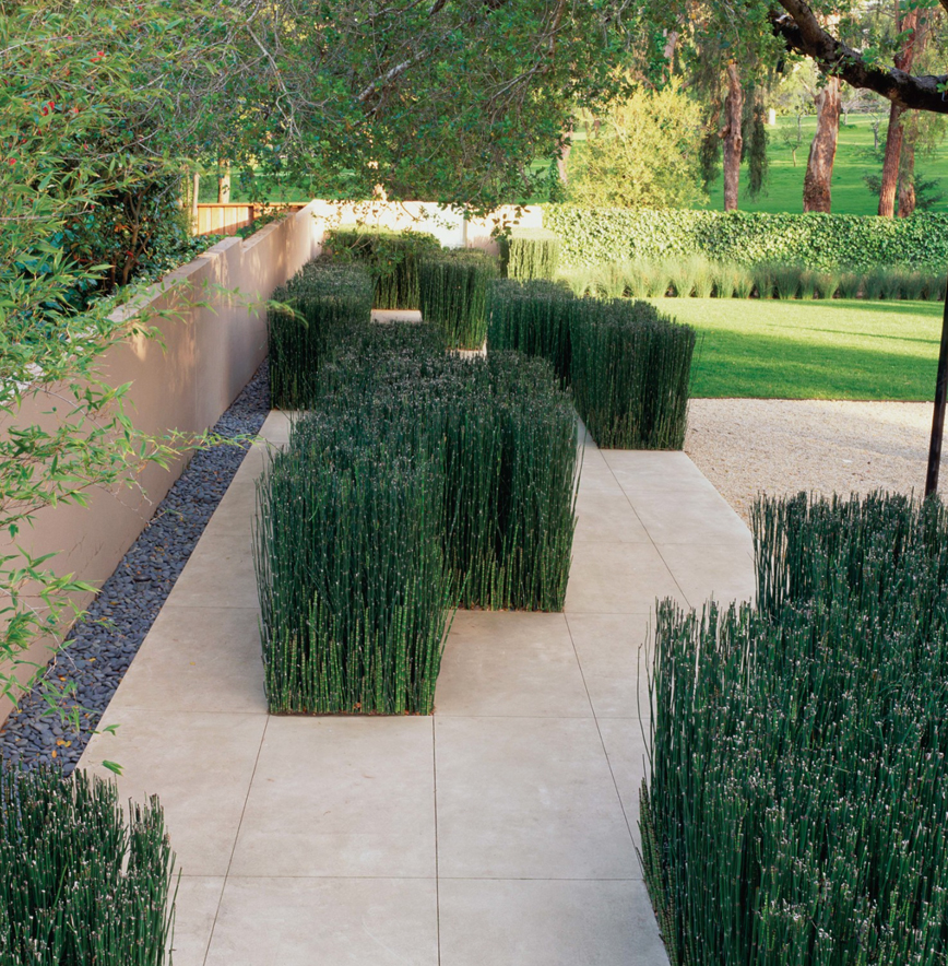 The paper mulberry garden plants equisetum for Plants for contemporary garden design