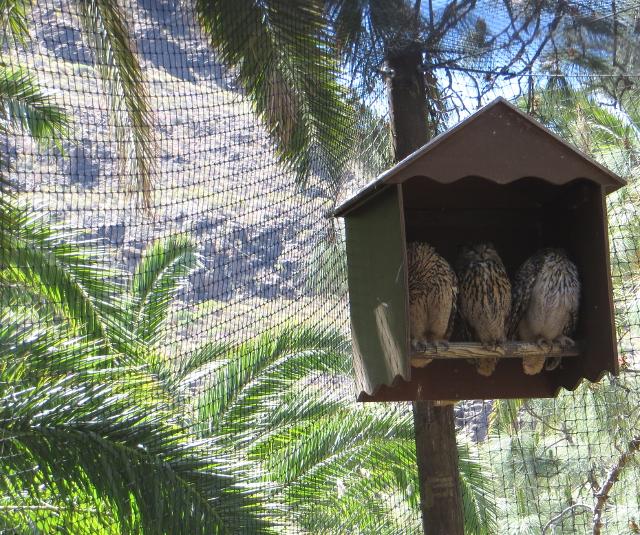 owls palmitos park gran canaria
