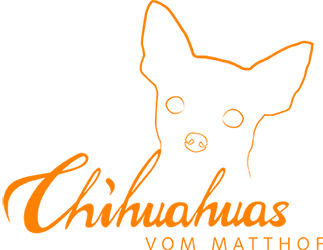Chihuahuas und Chihuahua-Welpen vom Matthof