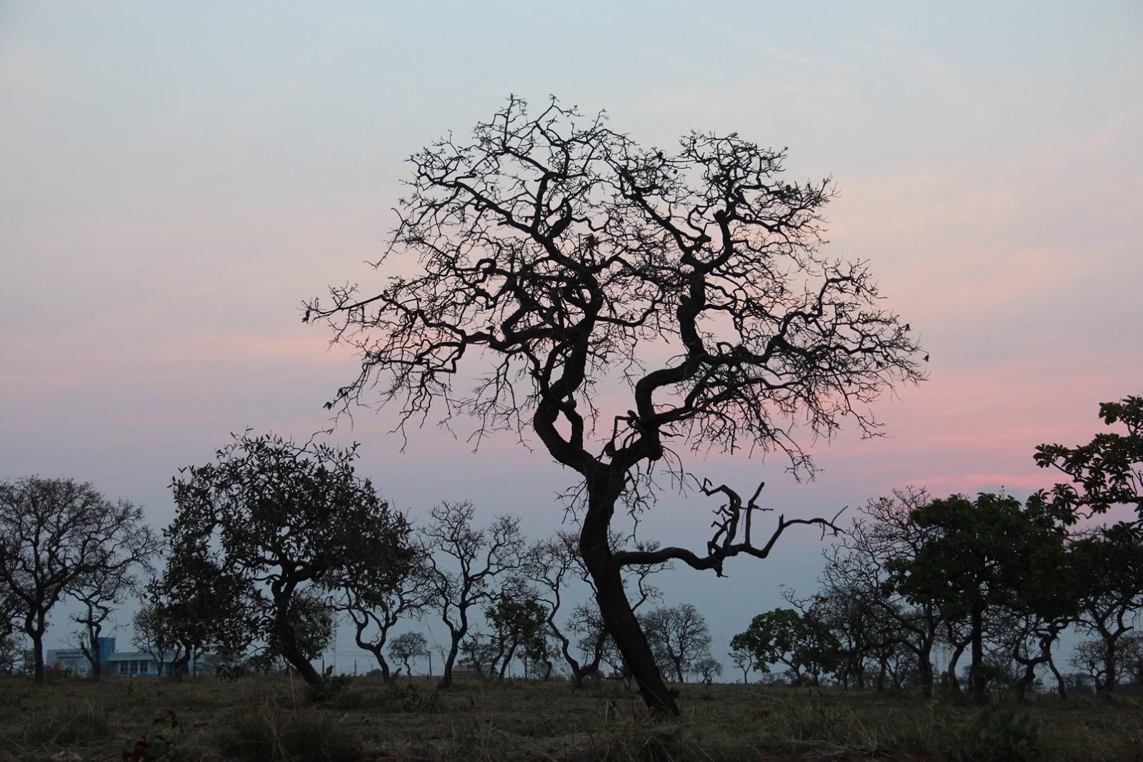 Paisagem do Cerrado na estação seca promove belas silhuetas - foto Elma Carneiro