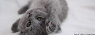 Grey Cute Kitten Cover Photo