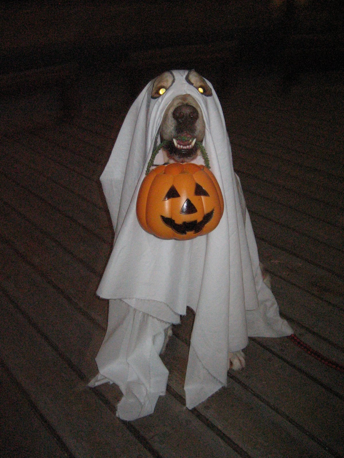 homer, the golden retriever: preparing for halloween and dad's barkday