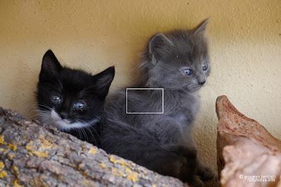 Fotografia di due gattini, nero e grigio