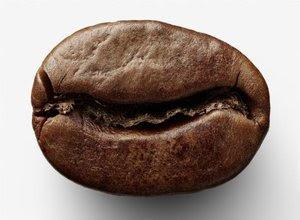 cara-pengeringan-biji-kopi.jpg