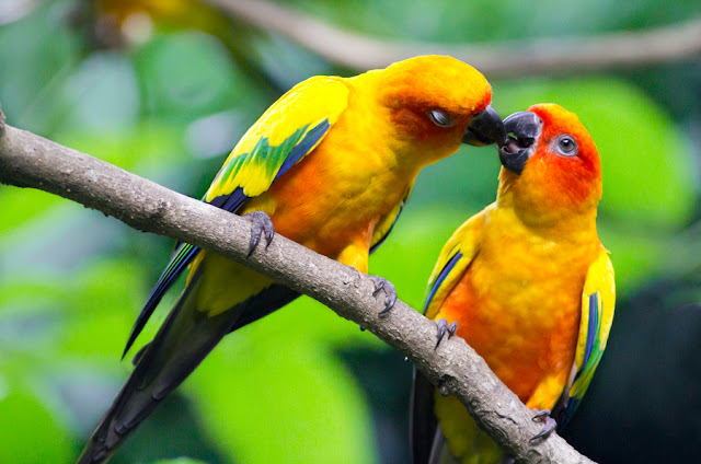 Beautiful love birds images - photo#27