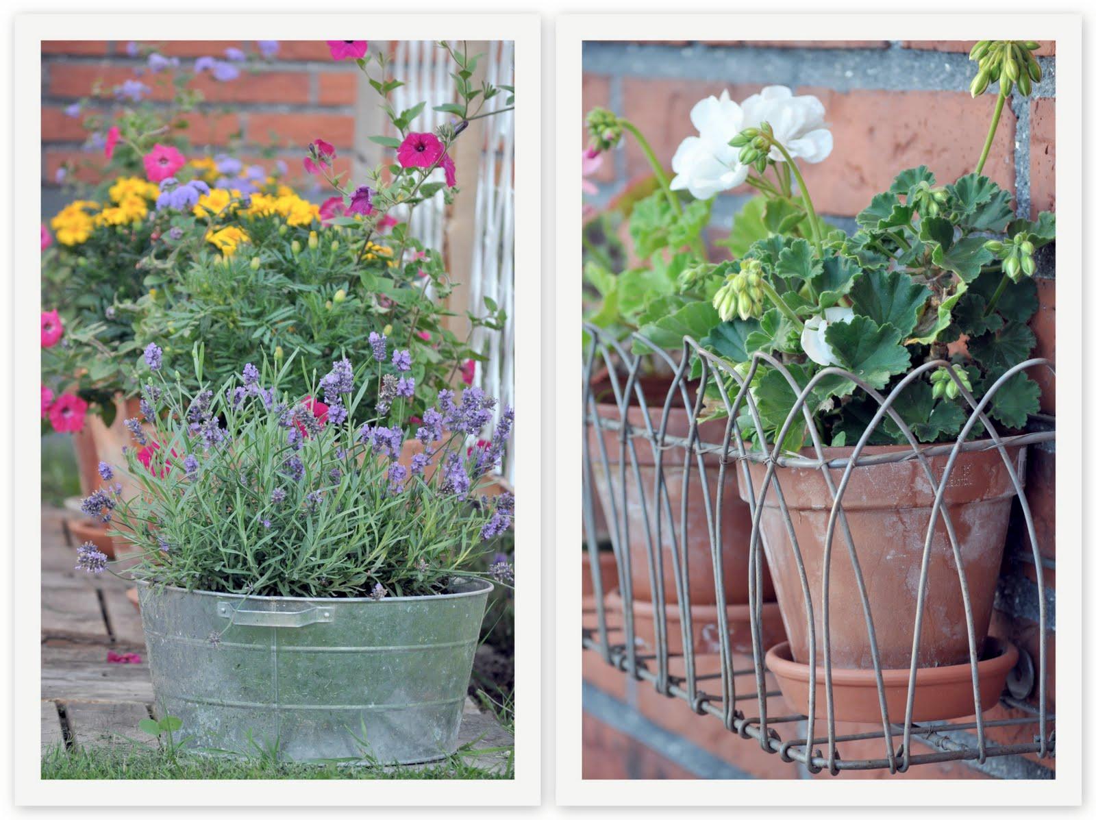 Bagateller och livsnödvändigheter Blomsterprakt