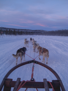 Winter sun or Winter wonderland holiday? Arctic Norway and Sweden - Husky dogsledding
