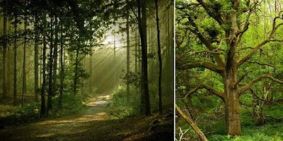 5 Hutan Paling Angker dan Misterius di Dunia
