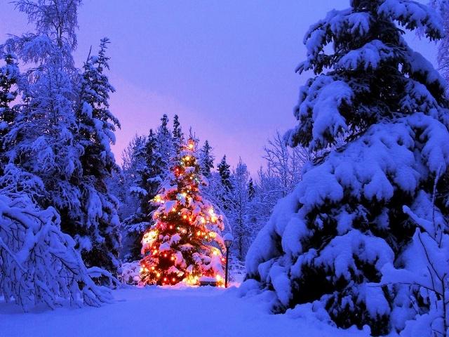 Un loco, un muérdago y una fiera (Venom / Blood Booster) Christmas+tree