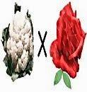 Rosa e couve-flor
