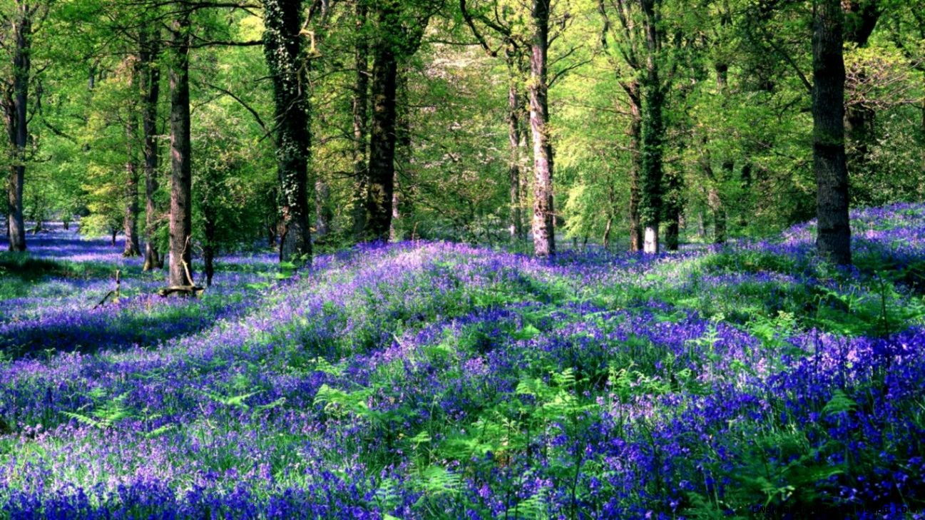 Spring Forest Flowers wallpaperotherhealth questionspicturesfotos