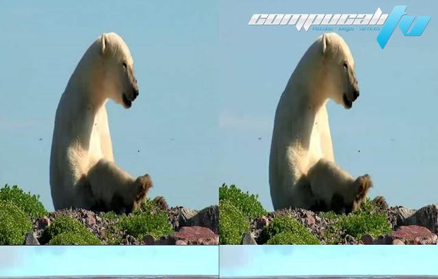 Polar Bears: A Summer Odyssey 3D SBS Latino