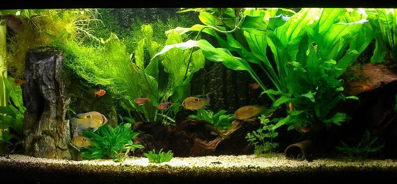 When It Comes To Picking An Aquarium Background To Go With Your Substrate  Hereu0027s What I Recommend.