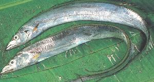 fish names in tamil pdf