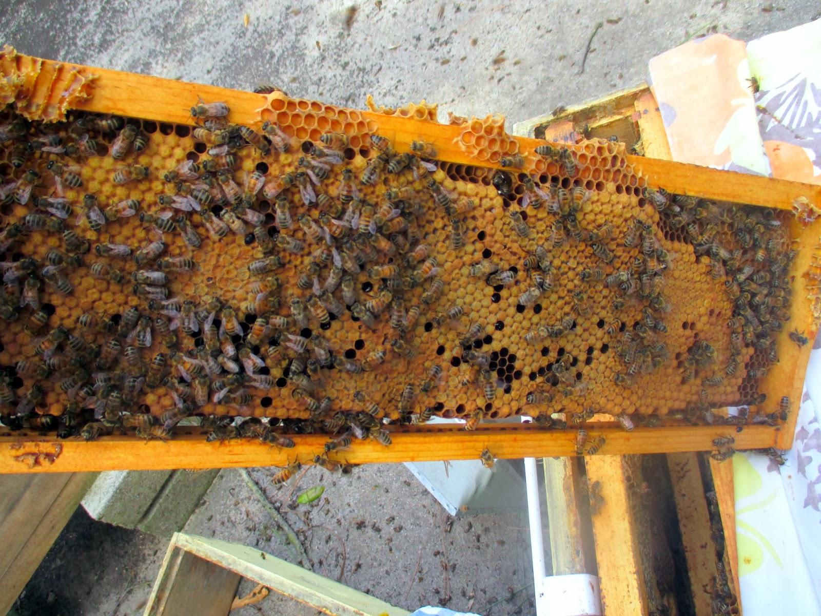bottom open hive closed