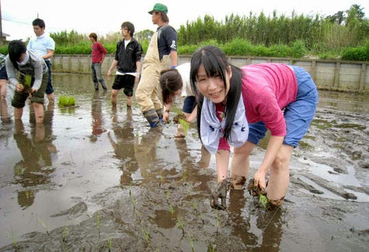 planting-paddy-in-japan