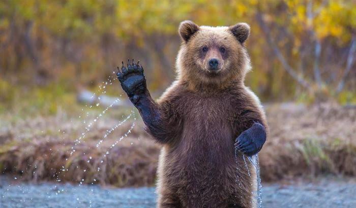 صور حيوانات طريفة, صور دببة مضحكة طريفة