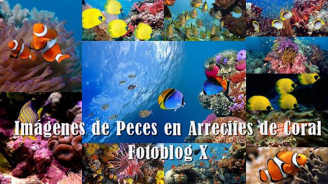 Imagenes de Peces en Arrecifes de Coral