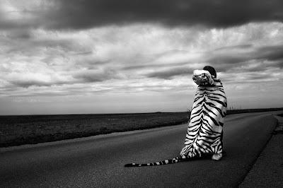 http://3.bp.blogspot.com/-qjq3pv4P2Us/T_Semm6GKXI/AAAAAAAACd4/afpQW0-uLvI/s1600/to_love_a_tiger.jpg