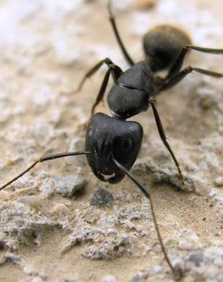 Todo para que puedas desarrollar tu propio huerto 50 - Como eliminar hormigas ...