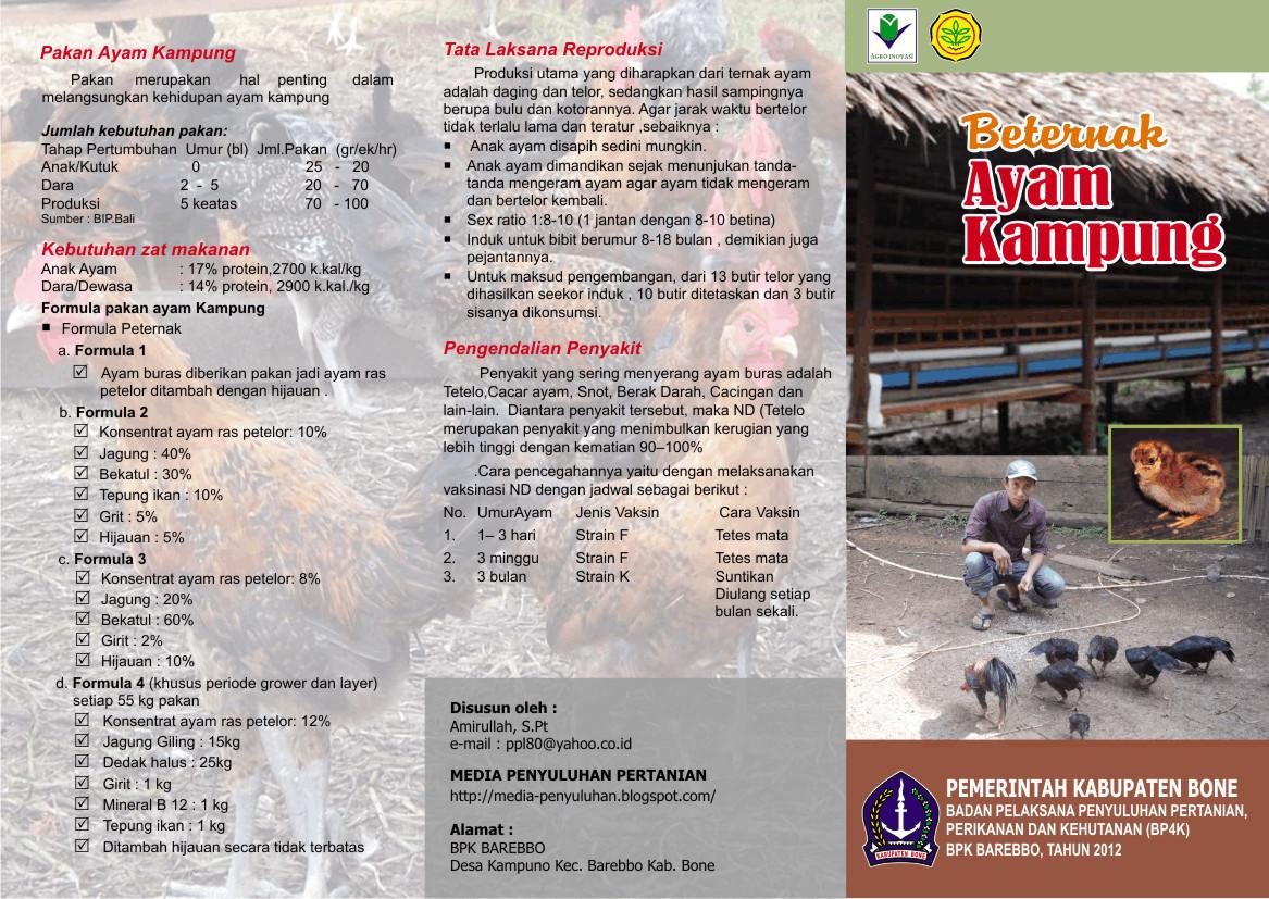 ternak sapi limosin di indonesia