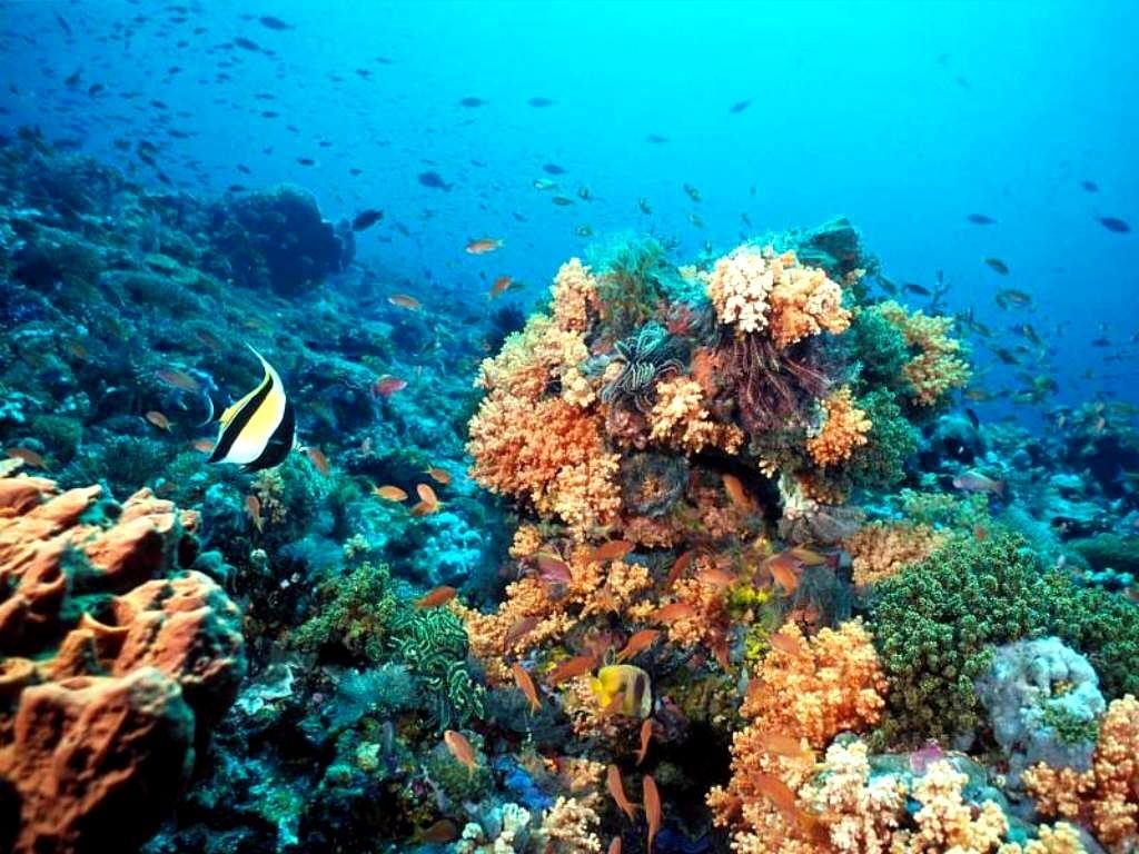 Problema sobre Pirámide ecológica en arrecife de coral 17-18 | BLOG ...
