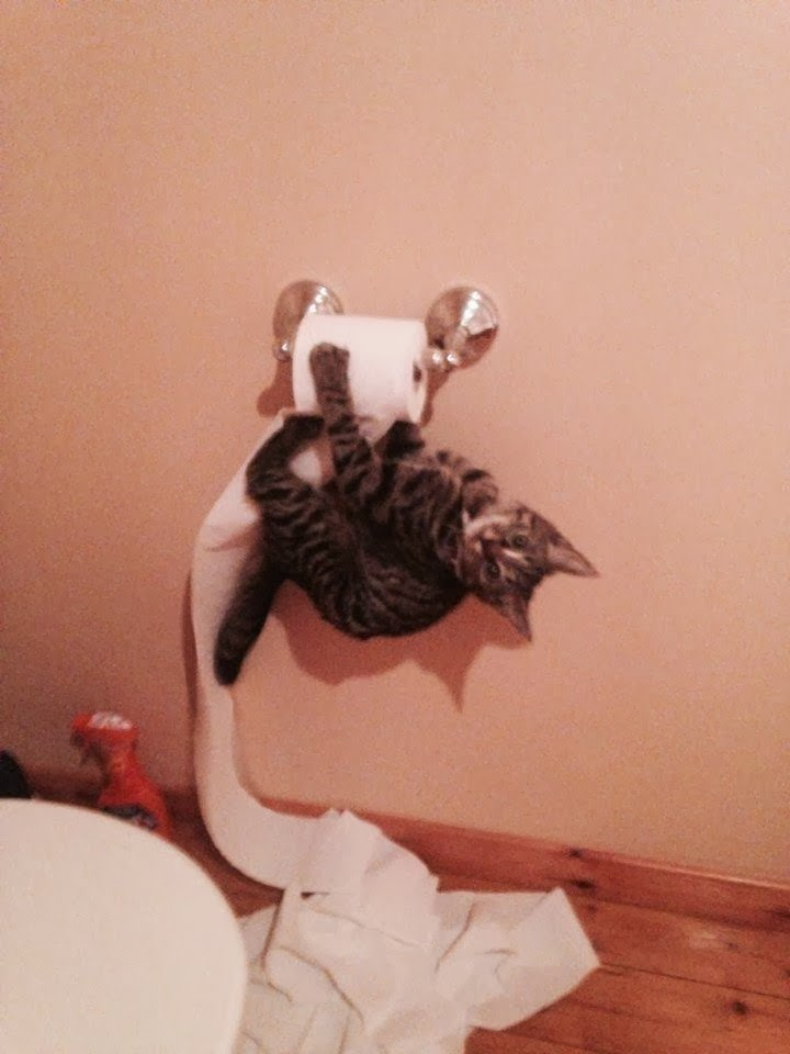 Funny cats - part 81 (40 pics + 10 gifs), cat pics, cat destroys toilet paper
