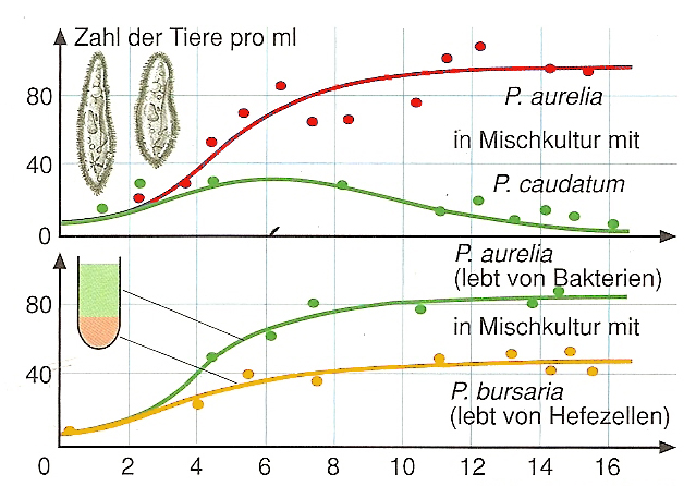 p aurelia and p caudatum Essays - largest database of quality sample essays and research papers on p aurelia and p caudatum.