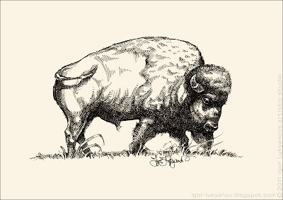 bison drawing, buffalo art