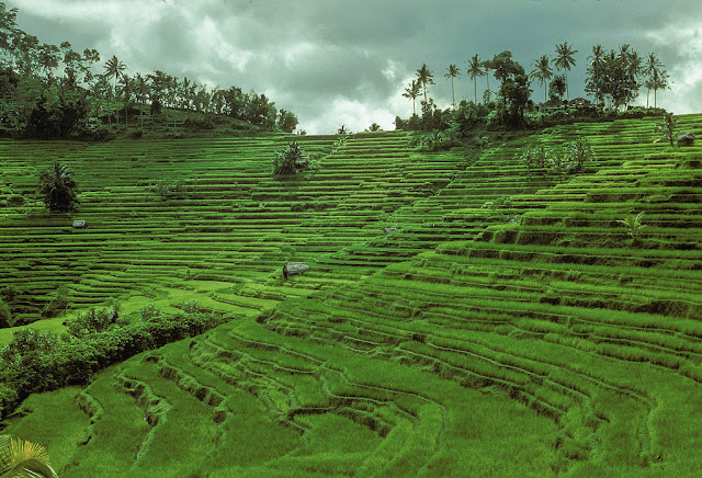 things to do in bali 9d