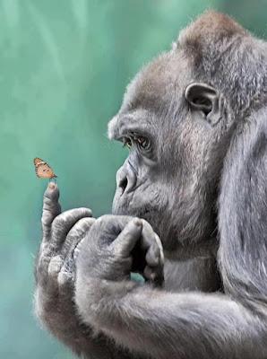 gorila y mariposa
