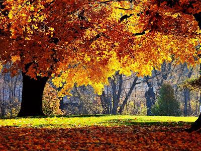 Autumn Season Standard Resolution Wallpaper 33