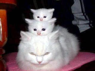 gata branca e filhotes